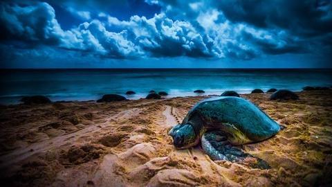 Magical Land of Oz -- Ocean