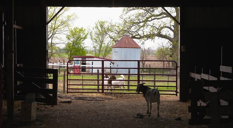 Greetings from Iowa: EPISODE   IOWA FARM SANCTUARY