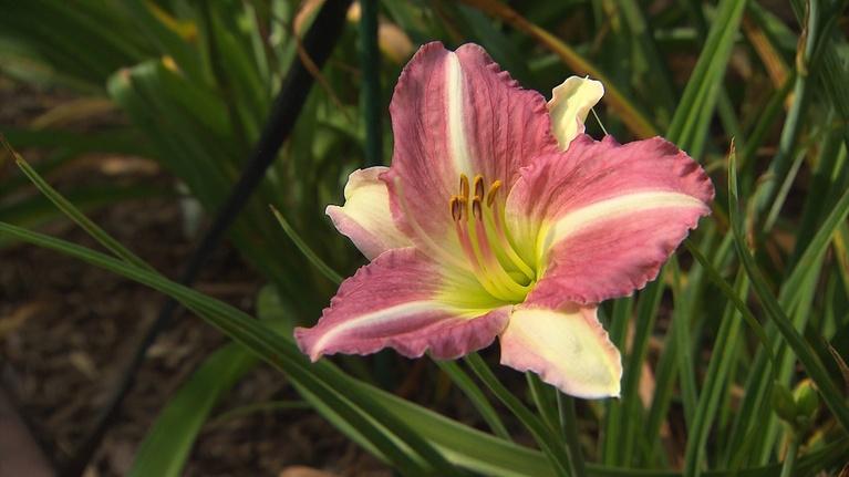 Volunteer Gardener: Volunteer Gardener 2747