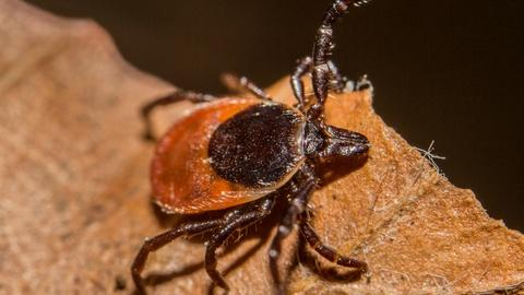 PBS NewsHour -- Dogs can get a Lyme disease vaccine. Why can't humans?