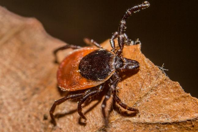 Dogs can get a Lyme disease vaccine. Why can't humans?