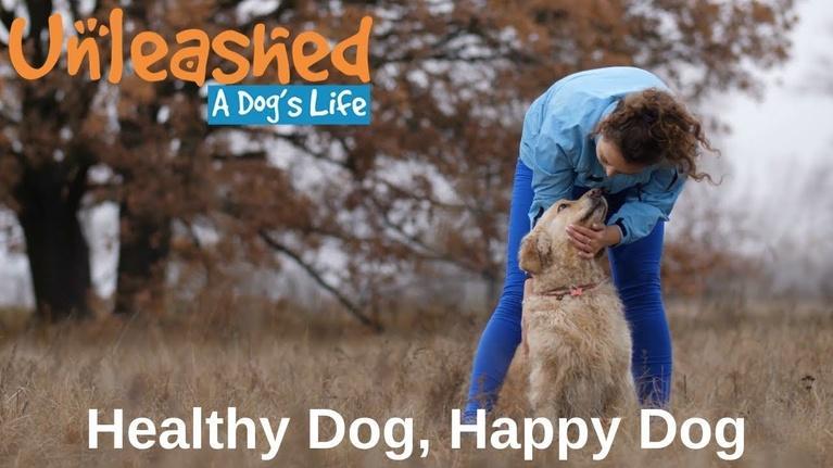 Unleashed: A Dog's Life: Healthy Dog, Happy Dog