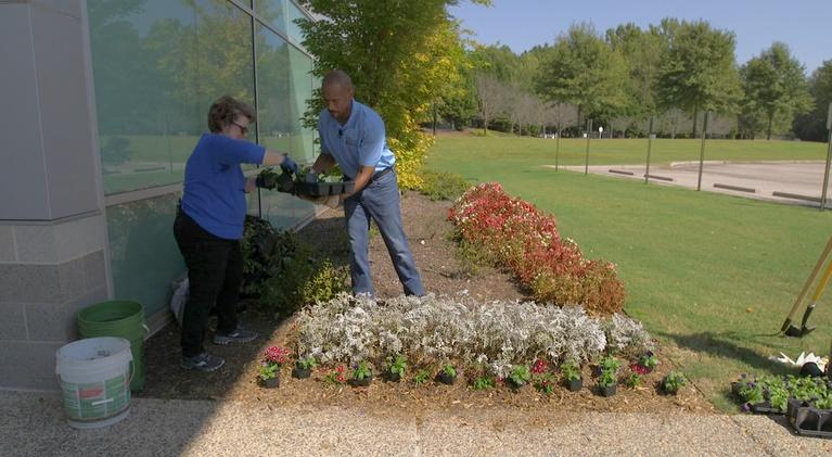 The Family Plot: Planting Fall Annuals & Apple Tree Diseases