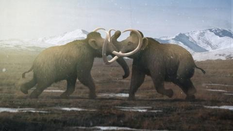 Eons -- Why Male Mammoths Lost the Game (w/ TierZoo!)