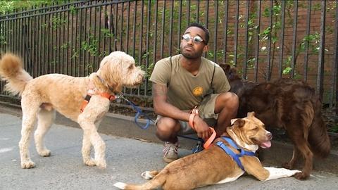 My Everyday Hustle: Meet Carl the Three-Legged Dog
