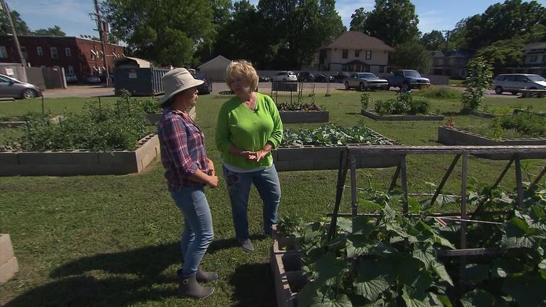 Volunteer Gardener: Volunteer Gardener 2704