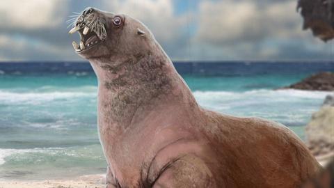 Eons -- How the Walrus Got Its Tusks