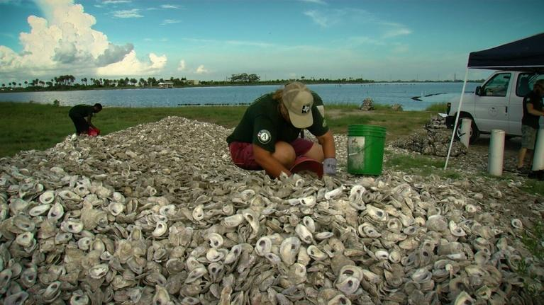 Texas Parks and Wildlife: Oyster Shell Recycling, Bighorn Sheep & Looking for Bees