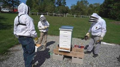 Roads to Recovery | Beekeeping - Web Extra