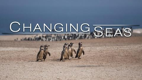 Changing Seas -- Peru's Desert Penguins