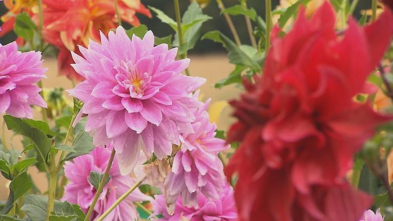 Volunteer Gardener: Volunteer Gardener 2811