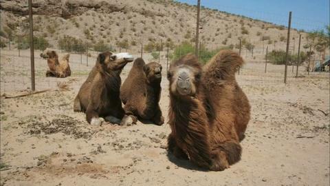 S5 E6: The Concrete that Broke the Camel's Back