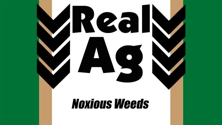Real Ag: Real Ag Noxious Weeds & Plant Protection Ep711