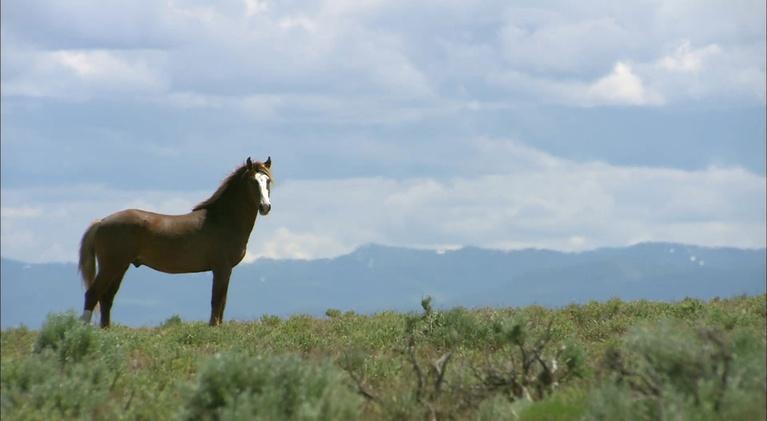 Outdoor Idaho: Wild Horses