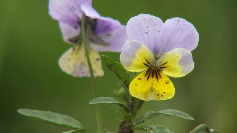 Backyard Farmer: Backyard Farmer: Native Wildflowers & Tomato Plants