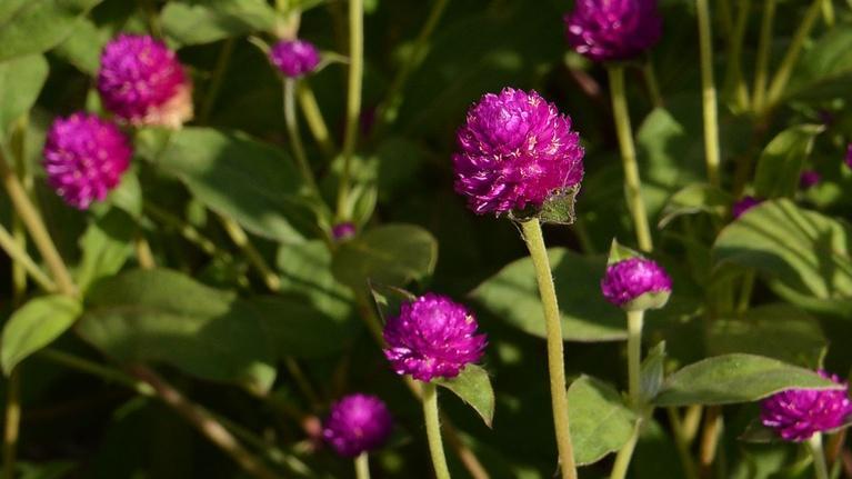 Central Texas Gardener: Xeriscape = Grow Green Sustainability