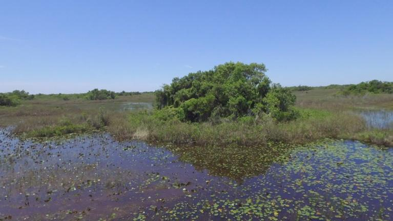 Battleground Everglades: War on Invasive Species