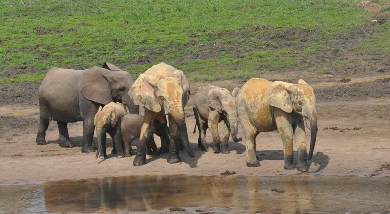 Doc World: Elephant Path - Njaia Njoku | Trailer