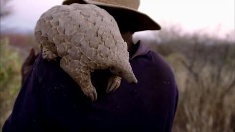 Nature -- Baby Pangolin and Her Best Friend