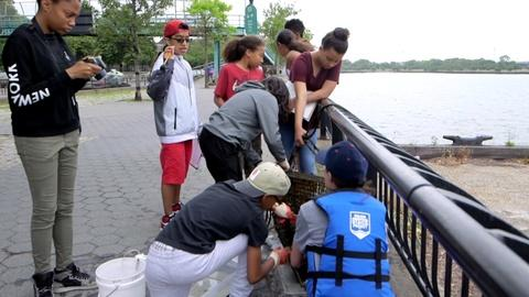 PBS NewsHour -- Can students return a billion oysters to a New York harbor?