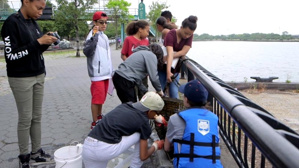 Can students return a billion oysters to a New York harbor? image