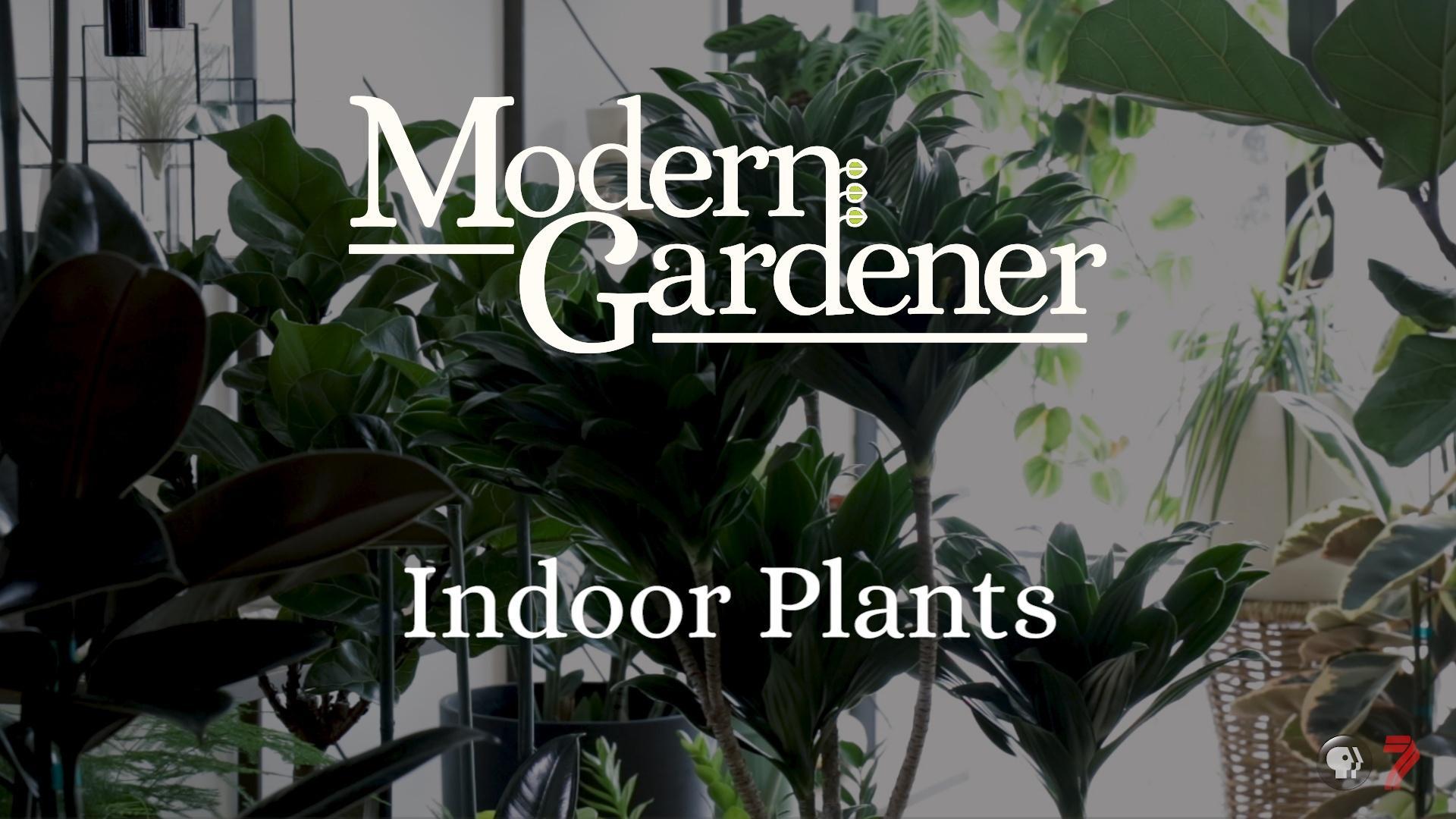 Modern Gardener Indoor Plants Episode 2 Pbs