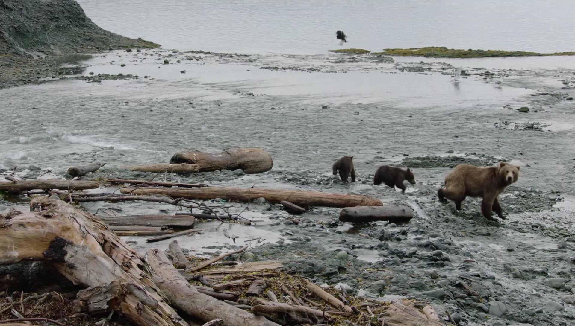 Wild Moments: Bears