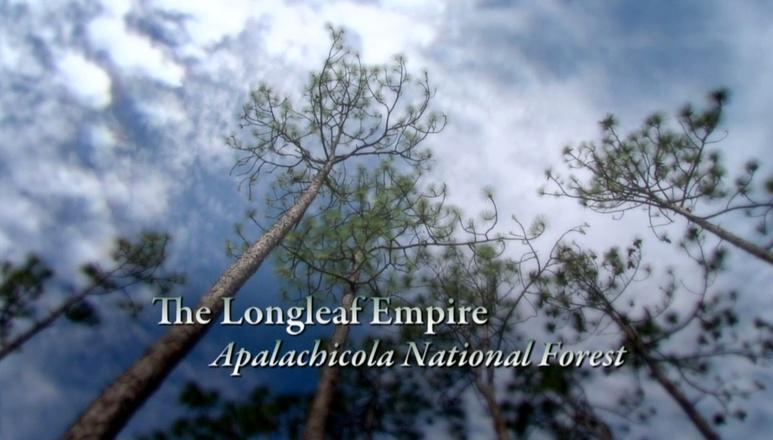 Season 3 Ep. 12: The Longleaf Empire - Appalachicola National Forest logo