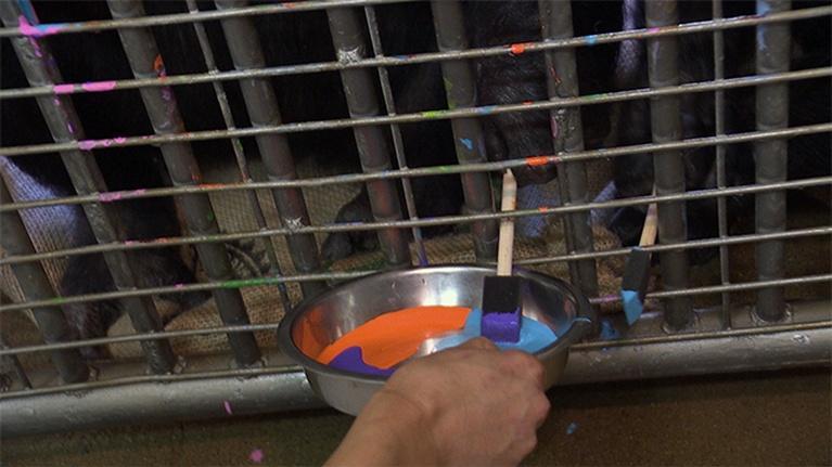 KVIE Arts Showcase: Sacramento Zoo Enrichment