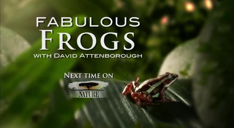 KENW-PBS New Mexico Presents: Nature: Fabulous Frogs