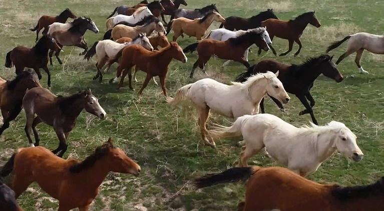 """Idaho Experience: Introduction to """"Taking the Reins"""""""