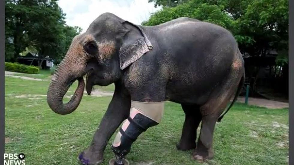 Helping animals walk again is this man's passion image