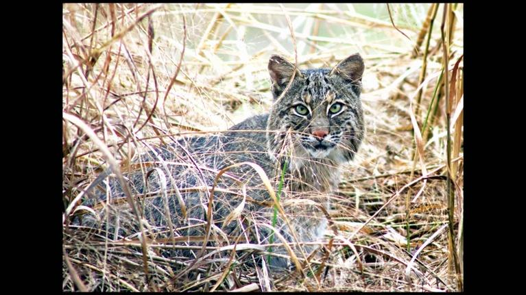 OzarksWatch Video Magazine: Missouri Wildlife: Close-Up