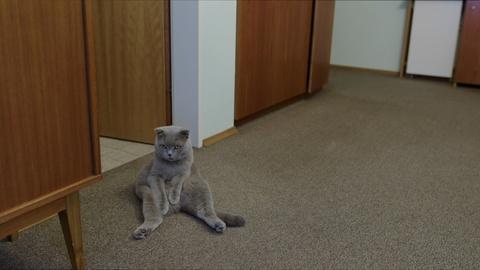 POV -- All Cats Are Grey in the Dark