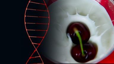 "The ""Holy Grail of Yogurt"" is CRISPR"