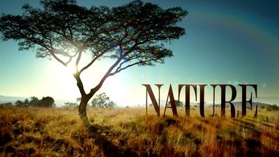 Nature | Welcome to PBS Nature
