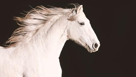 """Nature -- Official Preview: Equus """"Story of the Horse"""""""
