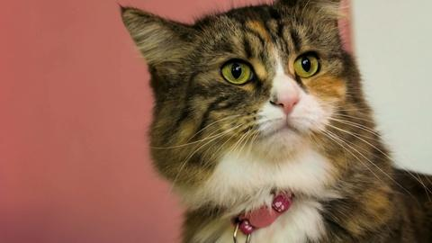 NOVA -- Are Cats More Expressive Than We Think?