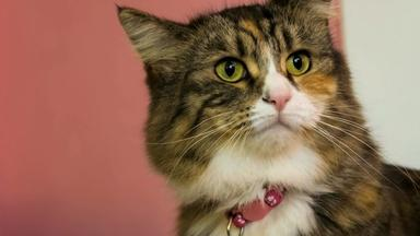 Are Cats More Expressive Than We Think?