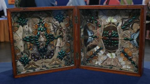 Antiques Roadshow -- Appraisal: Victorian Insect Collage, ca. 1870