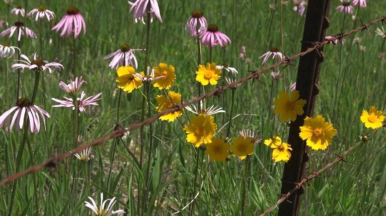 Show-Me Ag: Native Plants
