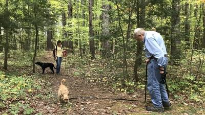 Windows to the Wild | Forest Therapy With Dogs