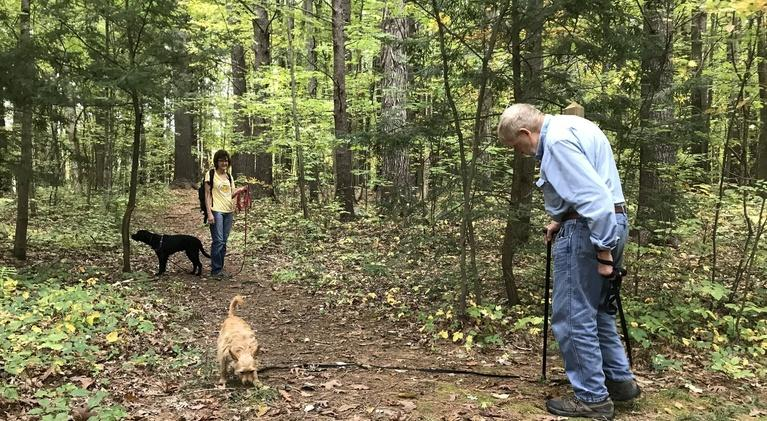 Windows to the Wild: Forest Therapy With Dogs