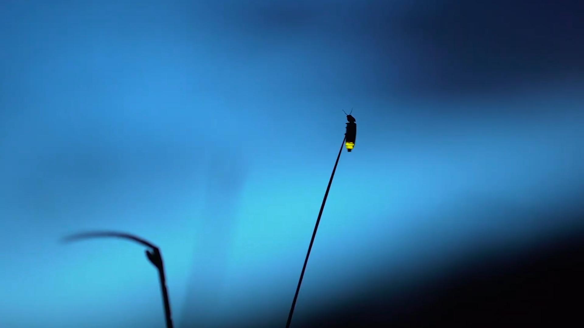 Family Traditions | Utah's Fireflies