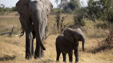 Naledi: One Little Elephant