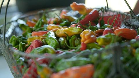 A Chef's Life -- Picking Peppers