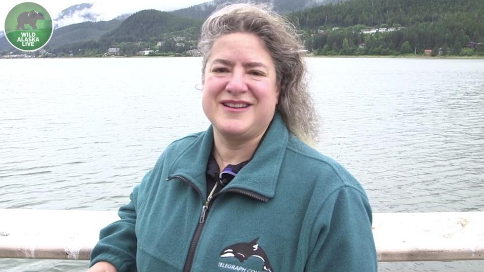 Dr. Joy Reidenberg on Orcas image