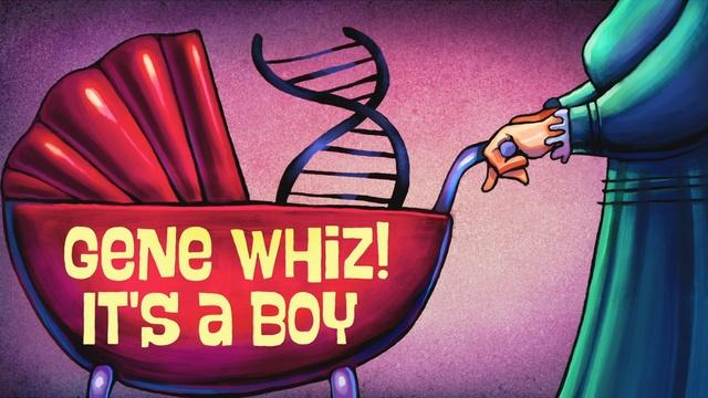 The Gene Explained | Gene Whiz! It's a Boy!