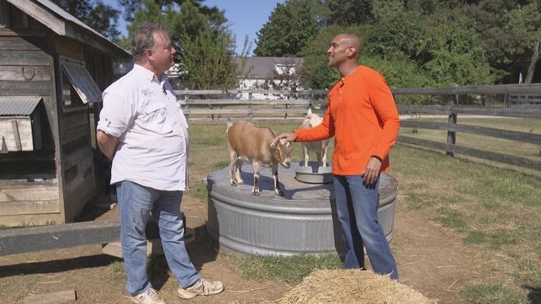 The Family Plot: Goats & Greenery for Flower Arrangements