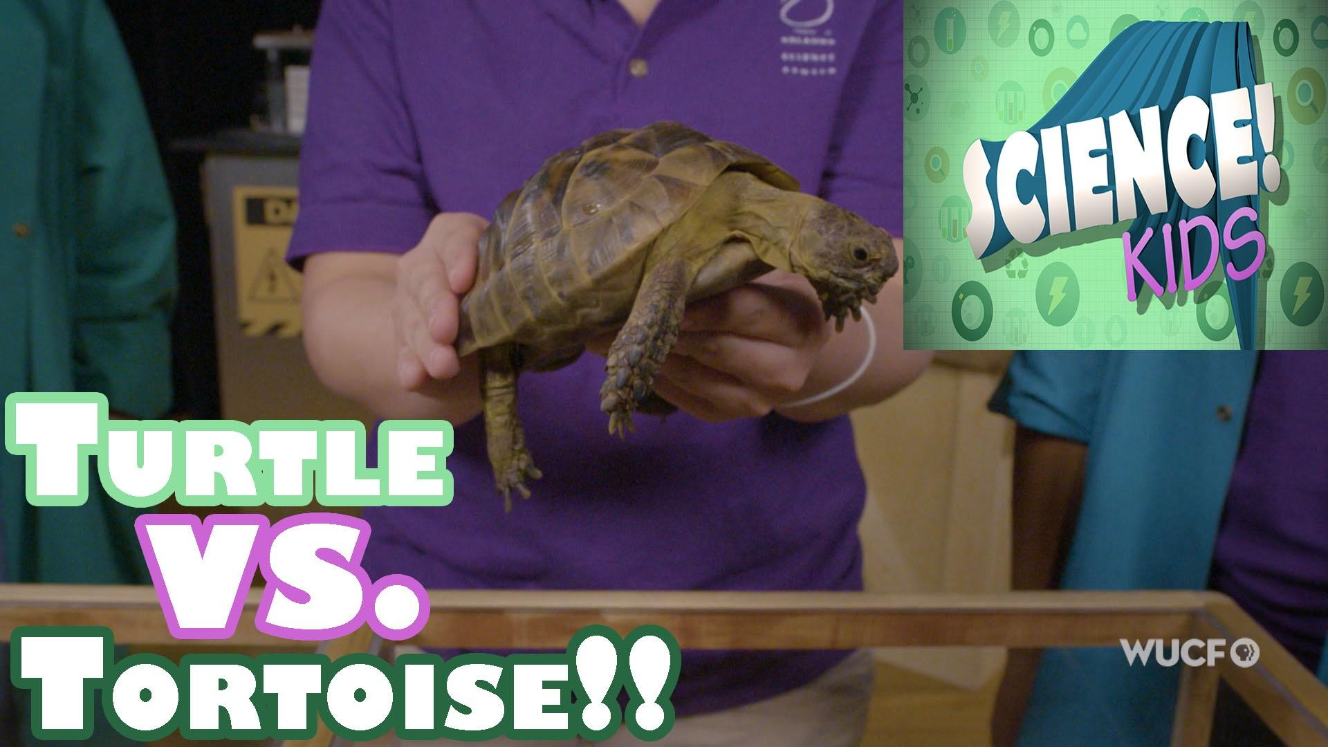 Turtles vs  Tortoises | Season 2 Episode 01/10/2018